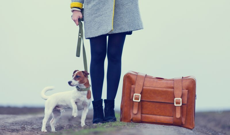 https: img-k.okeinfo.net content 2019 03 05 481 2026205 sulit-dideteksi-kenali-bahaya-rabies-dari-gigitan-anjing-gila-ldQU1Od3dg.jpg