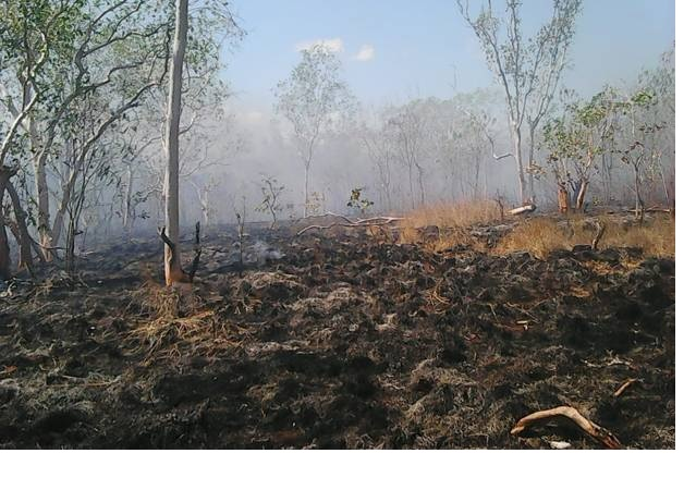 https: img-k.okeinfo.net content 2019 03 12 340 2028691 hutan-konservasi-taman-wisata-alam-sungai-dumai-riau-terbakar-6JP6Xuu8MQ.jpg
