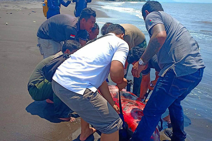 https: img-k.okeinfo.net content 2019 03 12 340 2028964 bangkai-paus-lodan-ditemukan-terdampar-di-pantai-rangkan-5JtPMrsnqO.jpg