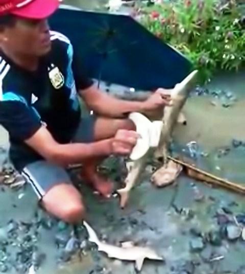 https: img-k.okeinfo.net content 2019 03 19 340 2032092 warga-sentani-sebut-ikan-hiu-legenda-yang-ditemukan-saat-banjir-bandang-JEcsw5HDhw.JPG