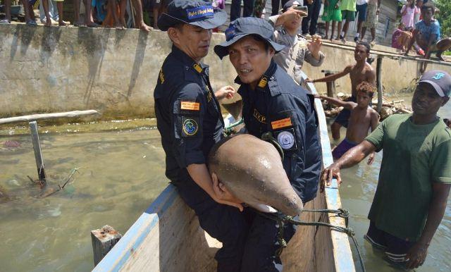 https: img-k.okeinfo.net content 2019 03 19 340 2032303 kkp-lepasliarkan-spesies-dilindungi-dugong-MbqiDcFCFG.jpg