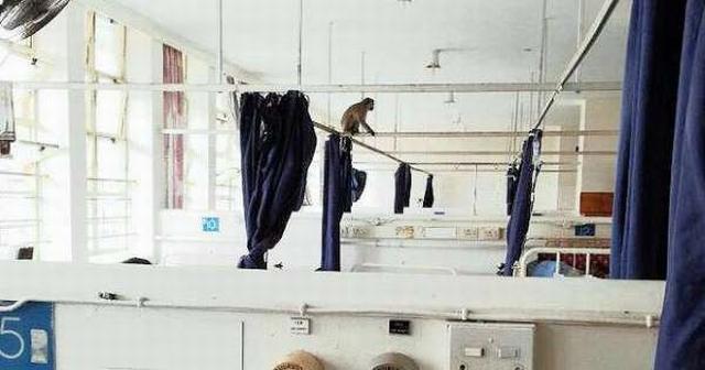 https: img-k.okeinfo.net content 2019 03 29 18 2036820 kawanan-monyet-teror-rumah-sakit-curi-makanan-pasien-86uBWRHKY0.jpg