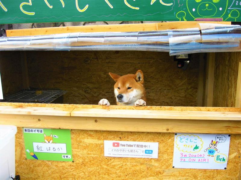 https: img-k.okeinfo.net content 2019 04 01 18 2037772 anjing-lucu-penjaga-toko-kentang-di-jepang-rebut-perhatian-warganet-J52eLjpTtd.jpg