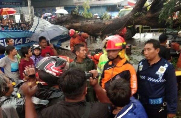 https: img-k.okeinfo.net content 2019 04 02 338 2038351 1-orang-tewas-akibat-mobilnya-tertimpa-pohon-di-jaktim-M9HbfTdVOo.jpg