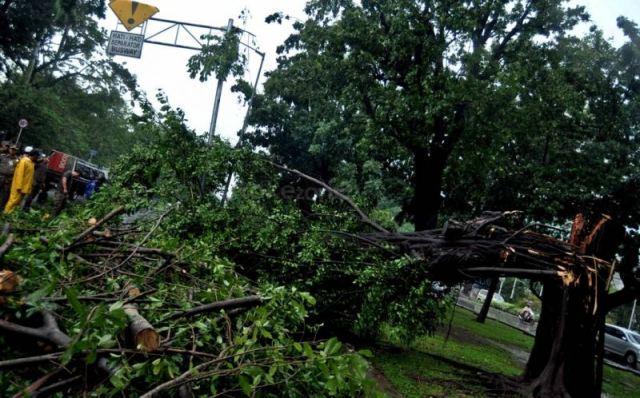 https: img-k.okeinfo.net content 2019 04 04 338 2038965 taman-margasatwa-ragunan-tanggung-biaya-korban-tertimpa-pohon-tumbang-5qDP7CovWT.jpg