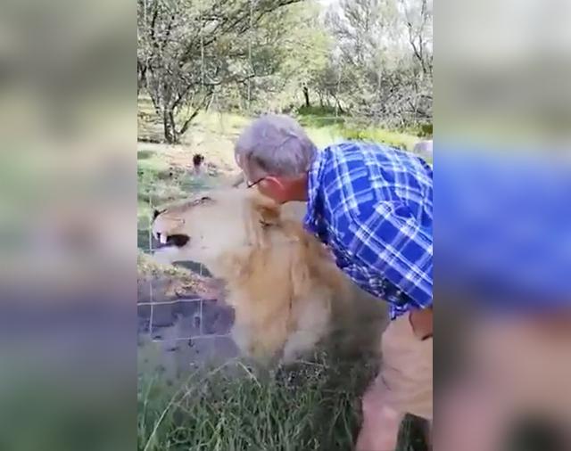https: img-k.okeinfo.net content 2019 04 12 18 2042542 coba-elus-singa-tangan-turis-ini-terluka-parah-karena-digigit-5ZoG15UZZW.jpg