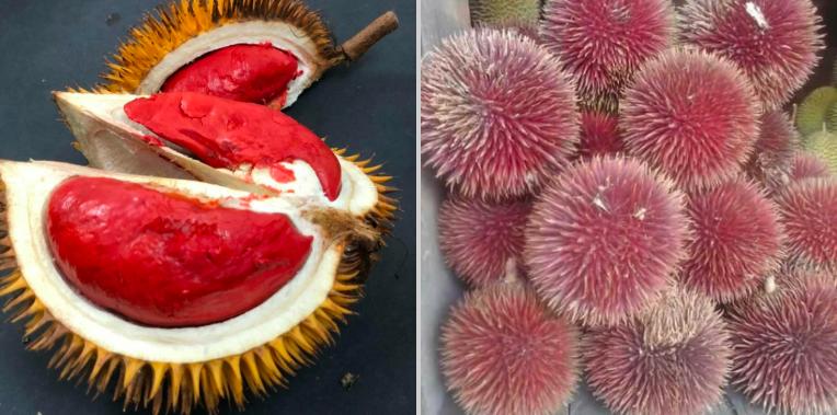 https: img-k.okeinfo.net content 2019 04 12 298 2042464 dari-sepetak-tanah-pria-asal-malaysia-punya-80-jenis-durian-n0ZkgSG6CI.png