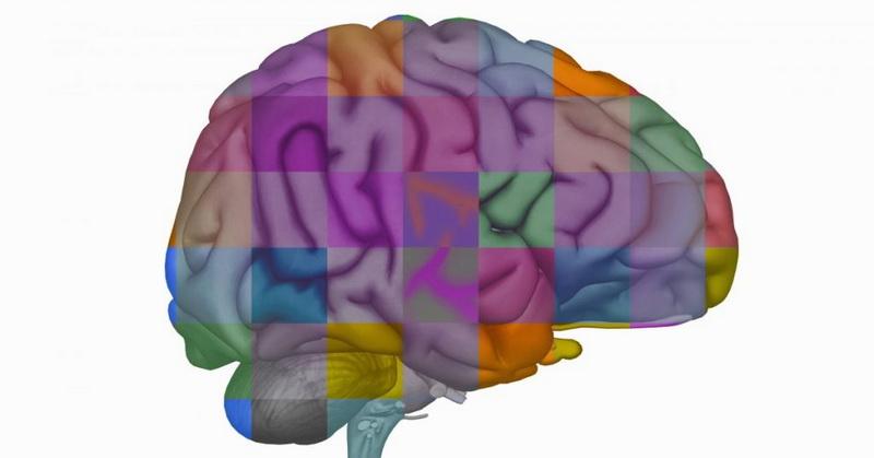 https: img-k.okeinfo.net content 2019 04 13 56 2043083 ilmuwan-memasukkan-gen-otak-manusia-ke-kera-wfPnzA7fhC.jpg