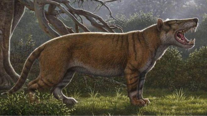https: img-k.okeinfo.net content 2019 04 22 18 2046239 fosil-singa-raksasa-ditemukan-di-laci-museum-kenya-hPVR0SuXt0.jpg
