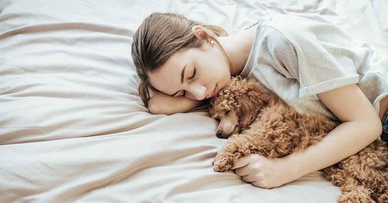 https: img-k.okeinfo.net content 2019 04 22 196 2046633 tidur-bareng-anjing-bisa-cegah-mimpi-buruk-crzhmzMdC7.jpg
