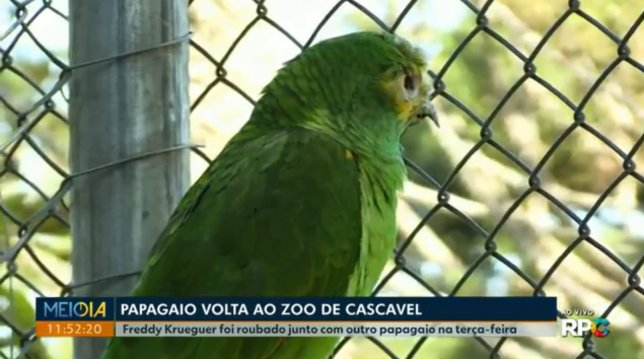 https: img-k.okeinfo.net content 2019 05 06 18 2052203 beo-tangguh-di-brasil-bertahan-hidup-setelah-diculik-tertembak-dan-digigit-ular-C615IoixWZ.jpg