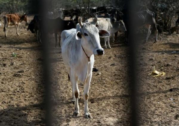 https: img-k.okeinfo.net content 2019 05 17 18 2057103 seorang-pria-muslim-tewas-dalam-kekerasan-terkait-sapi-di-india-Ia14a8IGFn.jpg