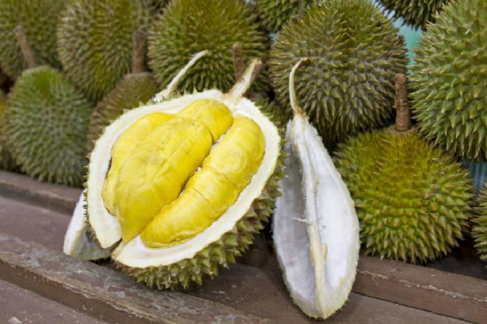 https: img-k.okeinfo.net content 2019 05 17 481 2056789 ini-aturan-makan-durian-bagi-ibu-hamil-5t20SQmY2k.png