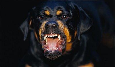https: img-k.okeinfo.net content 2019 05 20 612 2057796 viral-tips-sesat-lawan-anjing-terlatih-di-demo-22-mei-90ts7ougn1.jpg