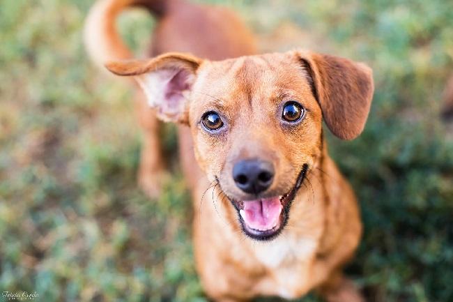 https: img-k.okeinfo.net content 2019 05 23 56 2059618 ketika-anjing-tersenyum-ini-penjelasan-ilmiahnya-L2HX41nOP4.jpg