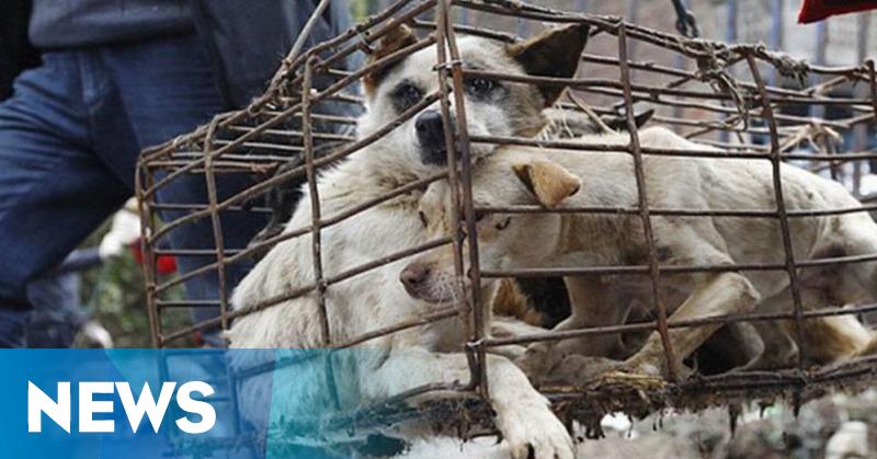 https: img-k.okeinfo.net content 2019 05 29 244 2061875 kasus-anjing-rabies-di-klungkung-bali-terus-bertambah-FFP3d1DLB2.png