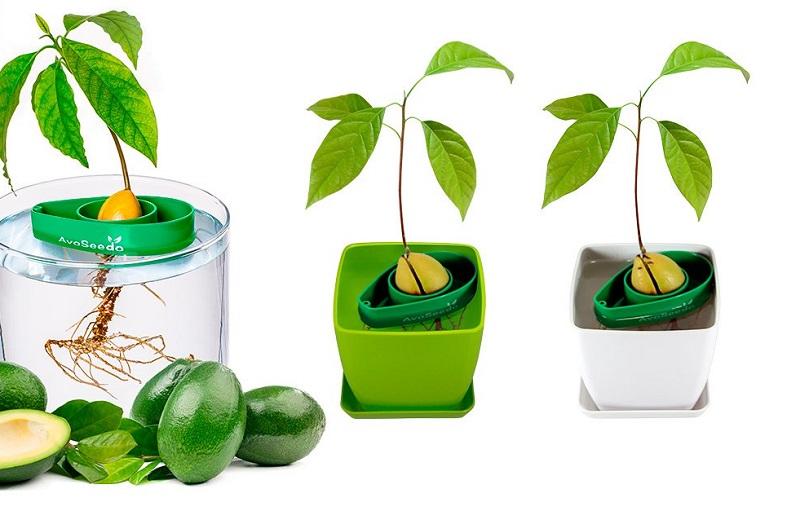 https: img-k.okeinfo.net content 2019 05 31 298 2062651 pohon-alpukat-mini-khusus-anak-anak-baik-untuk-tumbuh-kembangnya-WalcSivUEr.jpg