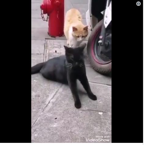 https: img-k.okeinfo.net content 2019 06 06 196 2064209 kucing-ini-ngenes-banget-pas-diselingkuhi-hewan-sekarang-kok-drama-banget-sih-PqsEEmZLif.png