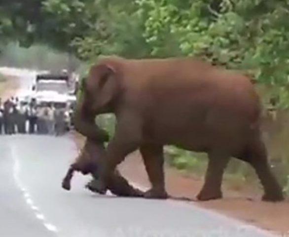 https: img-k.okeinfo.net content 2019 06 11 18 2065406 kawanan-gajah-gelar-prosesi-pemakaman-anak-yTZCDdCXzA.jpg