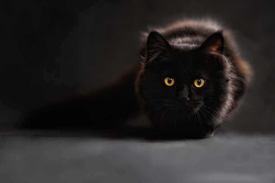 https: img-k.okeinfo.net content 2019 06 11 612 2065266 takut-dimandikan-kucing-ini-teriak-sebut-nama-agus-4QbU1RKeJx.jpg