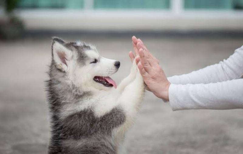 https: img-k.okeinfo.net content 2019 06 17 612 2067264 wow-peneliti-ungkap-anjing-bisa-deteksi-orang-yang-depresi-AGxZgV0nKj.jpeg