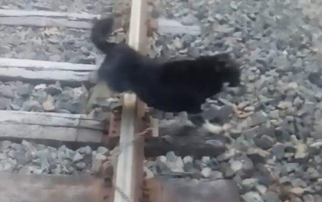 https: img-k.okeinfo.net content 2019 06 20 18 2068813 masinis-hentikan-kereta-demi-lepaskan-anjing-yang-diikat-di-rel-SzoWAopYBW.jpg