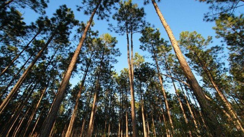 https: img-k.okeinfo.net content 2019 06 28 320 2072087 pemerintah-akan-bagikan-980-000-ha-lahan-hutan-untuk-masyarakat-Og9Ksuyqrx.jpg