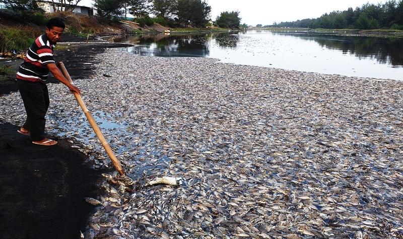 https: img-k.okeinfo.net content 2019 07 04 512 2074785 320-ton-ikan-mati-mendadak-di-sragen-ini-penyebabnya-Y0wzW6cyJa.jpg