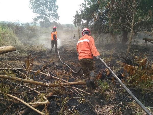 https: img-k.okeinfo.net content 2019 07 15 340 2079172 3-517-hektare-hutan-dan-lahan-di-riau-terbakar-I72Lw3WyKa.jpg