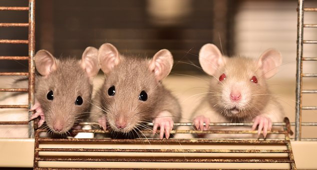 https: img-k.okeinfo.net content 2019 07 21 612 2081634 parah-istana-buckingham-diserang-pasukan-tikus-iLAAcAXFv3.jpg