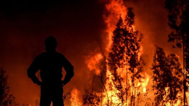 https: img-k.okeinfo.net content 2019 07 22 18 2081917 800-petugas-pemadam-dikerahkan-untuk-atasi-kebakaran-hutan-besar-di-portugal-Ownjo3ZGjc.jpg