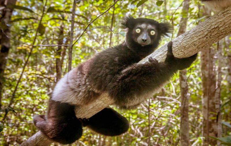 https: img-k.okeinfo.net content 2019 07 26 612 2083908 9-hewan-ini-tak-akan-kamu-temukan-di-kebun-binatang-salah-satunya-dari-indonesia-n2CEu5dbN9.jpg