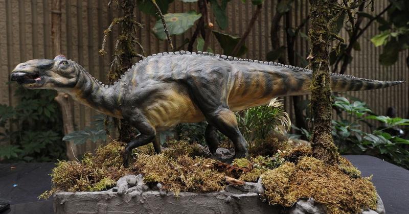 https: img-k.okeinfo.net content 2019 07 31 612 2085783 bocah-10-tahun-temukan-11-telur-dinosaurus-ini-kisahnya-olIwm2ou0t.jpg