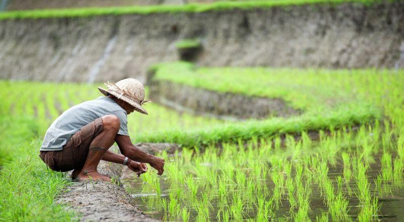 https: img-k.okeinfo.net content 2019 08 05 320 2088101 kenaikan-nilai-ekspor-pertanian-dinilai-patut-diapresiasikan-lHScSGMFQH.jpg