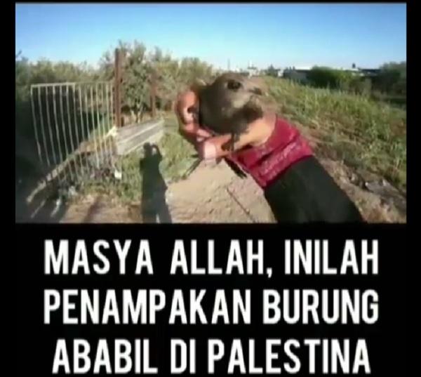 https: img-k.okeinfo.net content 2019 08 10 614 2090307 viral-penampakan-burung-ababil-di-palestina-benarkah-IHXHqXnnjJ.jpg