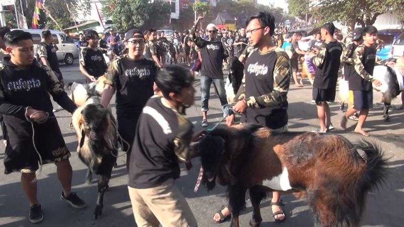https: img-k.okeinfo.net content 2019 08 11 519 2090558 serunya-tradisi-arak-arakan-hewan-kurban-di-kampung-temanggungan-malang-lV775yUrf2.jpg