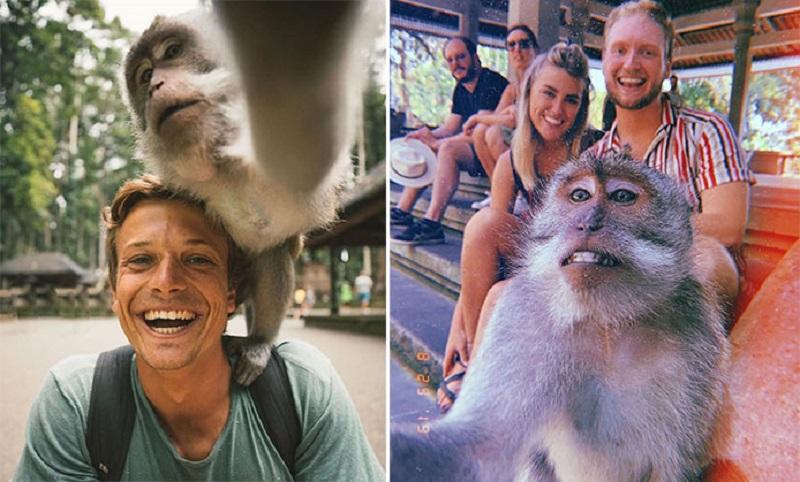 https: img-k.okeinfo.net content 2019 09 04 406 2100407 tutorial-selfie-bareng-monyet-di-objek-wisata-ubud-bali-hasilnya-natural-rYpDBzost7.jpg
