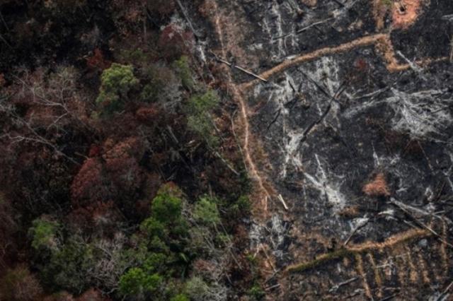 https: img-k.okeinfo.net content 2019 09 09 18 2102459 pejabat-badan-perlindungan-hutan-amazon-tewas-ditembak-KNokVsfwbx.jpg