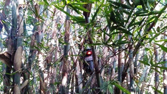 https: img-k.okeinfo.net content 2019 09 11 337 2103218 viral-ojol-dapet-order-mistis-motornya-nyangkut-di-pohon-bambu-pcCw9IoqBn.jpg