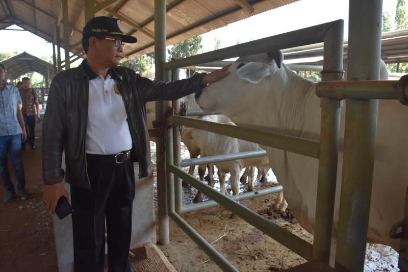 https: img-k.okeinfo.net content 2019 09 14 1 2104771 indonesia-mampu-penuhi-protein-hewani-dalam-negeri-SmnKXzeyFf.jpeg
