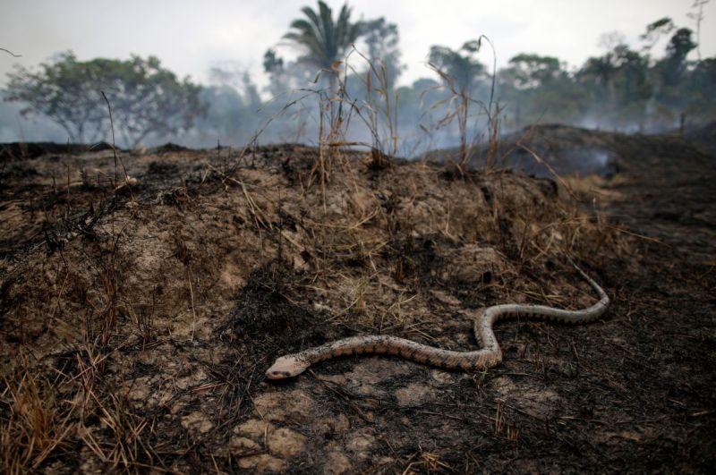 https: img-k.okeinfo.net content 2019 09 19 612 2107023 tak-hanya-tangkalaluk-kalimantan-juga-punya-ular-gaib-nabau-sepanjang-80-meter-NKAbxmuj3S.jpg