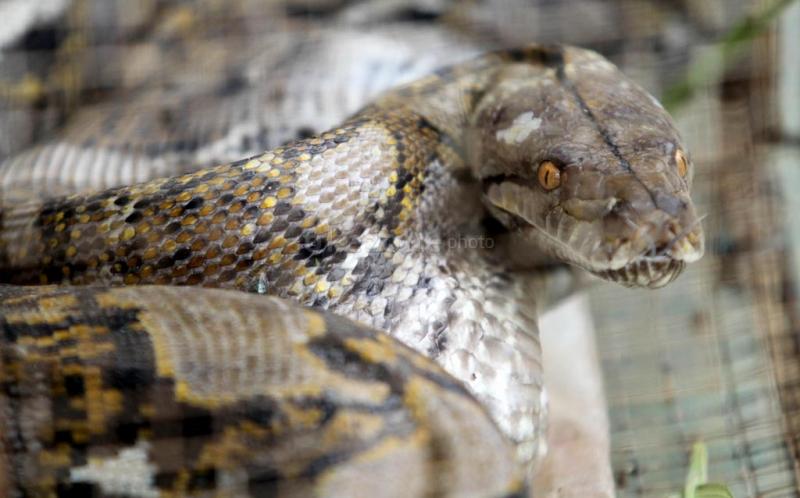 https: img-k.okeinfo.net content 2019 09 23 337 2108114 viral-ular-berkaki-mati-terbakar-di-hutan-riau-4pxSWTdYrb.jpg