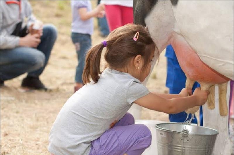 https: img-k.okeinfo.net content 2019 09 30 406 2111227 tak-perlu-ke-lembang-untuk-belajar-memerah-susu-sapi-coba-ke-cibugary-saja-QME0WkJiud.jpg