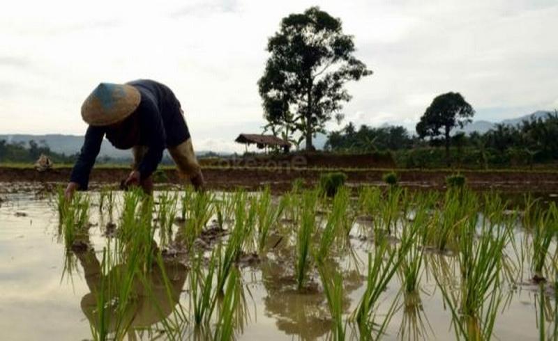 https: img-k.okeinfo.net content 2019 10 02 65 2112139 mahasiswa-ri-kembangkan-sistem-monitoring-lahan-petani-jadi-diuntungkan-C0xbwTF2zR.jpg