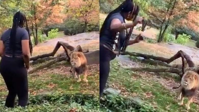 https: img-k.okeinfo.net content 2019 10 04 18 2112954 wanita-ini-diburu-polisi-karena-joget-di-kandang-singa-ap48jPlIkT.jpg