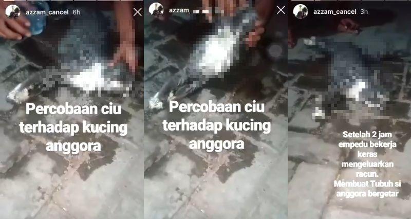 https: img-k.okeinfo.net content 2019 10 17 337 2118367 viral-kucing-mati-diduga-dikasih-ciu-ini-klarifikasinya-0c5y9yrRnu.jpg