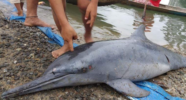 https: img-k.okeinfo.net content 2019 10 28 340 2122497 warga-mentawai-dikejutkan-lumba-lumba-masuk-sungai-B2GVGbjR84.JPG