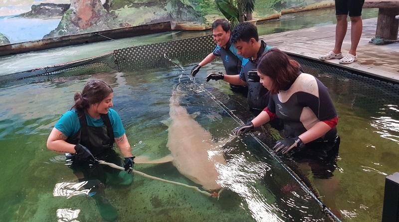 https: img-k.okeinfo.net content 2019 11 04 406 2125493 sensasi-berendam-bersama-ikan-pari-dan-hiu-di-irukandji-shark-and-ray-encounters-HMpQ6IV0DC.jpg