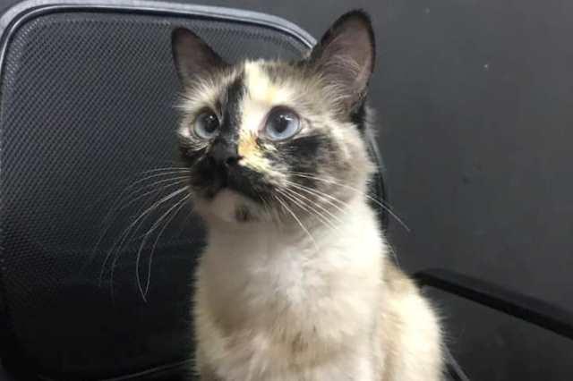 https: img-k.okeinfo.net content 2019 11 08 18 2127501 aksi-kucing-selamatkan-balita-1-tahun-sebelum-jatuh-dari-tangga-RpEGmxB23N.jpg