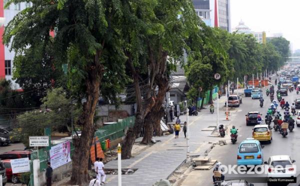 https: img-k.okeinfo.net content 2019 11 12 338 2128674 ketua-dprd-dki-kritik-penebangan-pohon-yang-dinilai-asal-asalan-gkrQAlzOLU.jpg